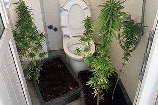 Australian man illegally grows cannabis in Vietnam