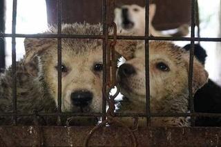 Câu chuyện thịt chó ở Hàn Quốc