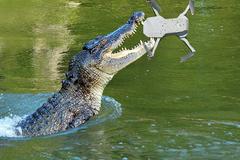 Cá sấu trong công viên Úc 'nghiền nát' máy quay khi bị ghi hình