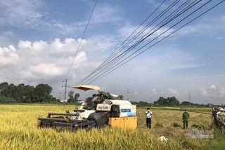 Hai nông dân bị điện giật chết ngoài ruộng ở Hải Dương