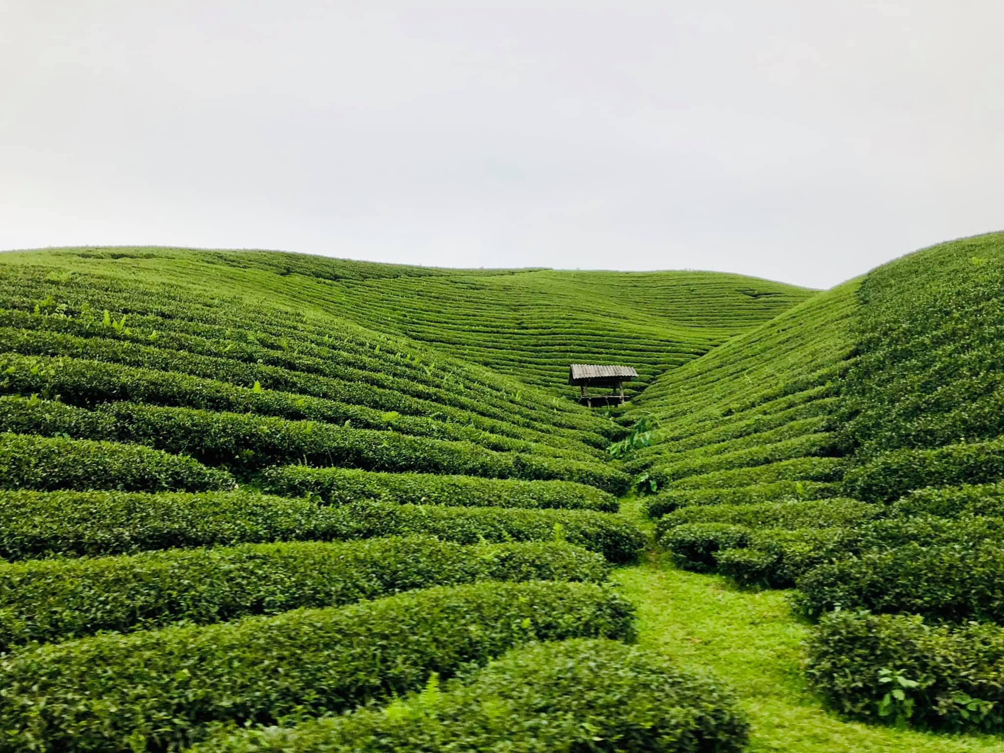 Mắc kẹt ở Mộc Châu, gia đình Hà Nội cuốc đất làm vườn, đưa con 'trèo đèo, lội suối'