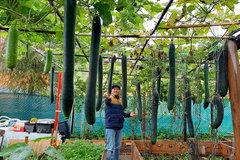 Ông bố Việt ở CH Séc cải tạo đất sỏi thành vườn rau