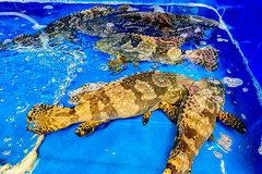 Đặc sản cá mú tồn hàng trăm tấn, giảm giá quá nửa vẫn ế ẩm