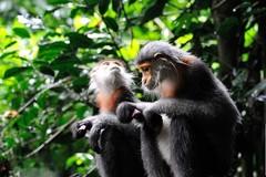 Tăng cường công cụ thực thi Công ước về buôn bán quốc tế các loài động vật, thực vật hoang dã nguy cấp