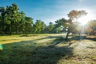The 'unique' bonsai pine forest in Gia Lai