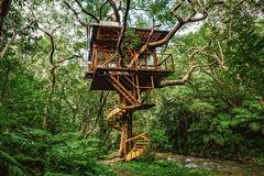 Giới nhà giàu bỏ nhiều tỷ xây nhà trên cây ở như 'người rừng'