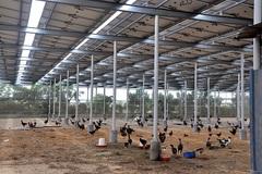 Điện mặt trời áp mái: Vừa tiết kiệm, vừa hiệu quả