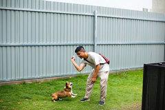 Chi hơn 63 triệu gửi chó cưng trong 3 tháng dịch ở TP.HCM