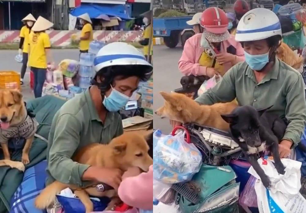 Chủ tịch huyện: 'Nếu chủ đàn chó 15 con âm tính thì tiêu hủy làm chi'