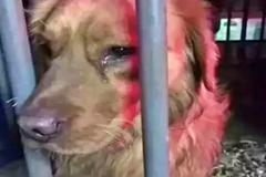 Được giải cứu, chú chó làm hành động khiến ai cũng nhói lòng