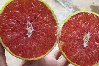 Loại cam ruột đỏ khác thường mới xuất hiện ở Việt Nam