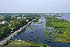 Vietnam to plant extra 20,000ha coastal forest to cope with climate change