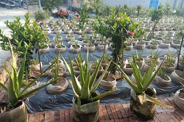 Nhiều bất thường trong dự án 'phủ xanh nha đam đất Việt' ở Hải Dương