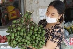 'Bỏ túi' hàng trăm triệu đồng từ vườn cau xứ Thanh Chương, Nghệ An