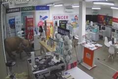 Chú trâu mộng lao thẳng vào cửa hàng điện tử khiến cô gái thót tim