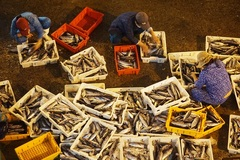 Hoạt động lặng lẽ ở cảng cá lớn nhất miền Trung ngày đầu mở bán