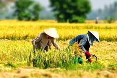 """""""Tăng cường khả năng chống chịu của nông nghiệp quy mô nhỏ với an ninh nguồn nước do biến đổi khí hậu khu vực Tây Nguyên và Nam Trung Bộ"""""""