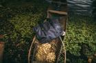 Hàng trăm chiếc túi hàng hiệu bị cắt rách và vứt xuống biển