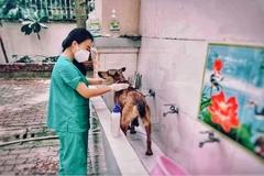 Cô gái chăm sóc chó, mèo cho F0 cách ly ở trường tiểu học