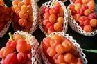 Nho Nhật Bản siêu đắt đỏ: Ăn đủ combo mất 20 triệu đồng