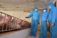 Giá lợn giảm xuống đáy, Bộ trưởng nói 'đừng vội hoảng hốt'