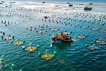Project on marine aquaculture development till 2030 approved