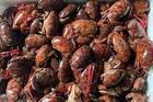Loại hải sản ngon hơn ghẹ, rẻ hơn cua thành đặc sản