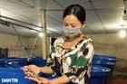 Chuyện lạ: Biến ruồi thành 'đội quân' xử lý rác thối
