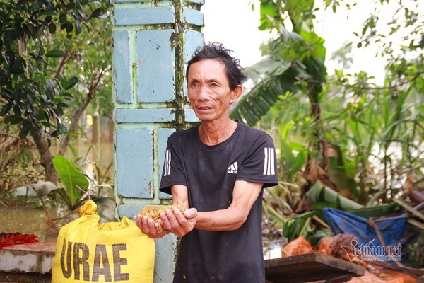 Người dân Quảng Nam thẫn thờ vì hàng tạ thóc ngâm trong nước lũ