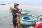 'Chết ngạt' sau cơn mưa lớn, làng biển thiệt hại hàng tỷ đồng