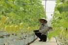 Vận dụng phù hợp kinh nghiệm, khuyến nghị từ Diễn đàn Chuyển đổi số nông nghiệp Việt Nam 2021